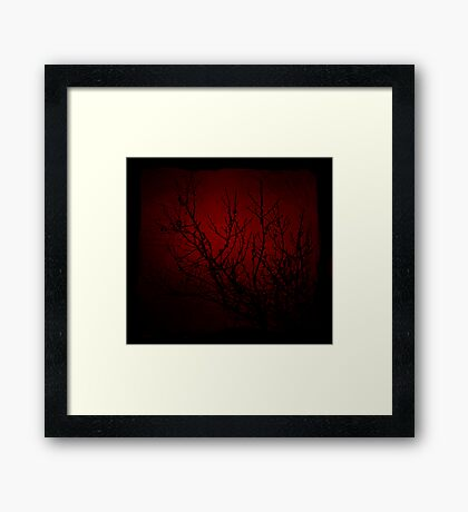 Sticks and Seeds Framed Print