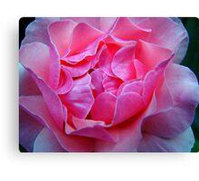 Rose Close up Canvas Print