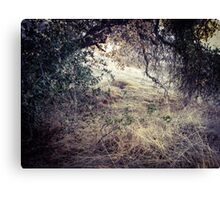 Wooded Den Canvas Print