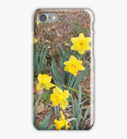 Daffodils ... iPhone Case/Skin