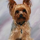 Yorkie Baby by ronibgood