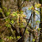 Spring Bustin' Out by Barbara Wyeth