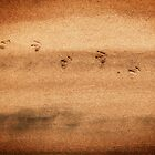 Birdprints by David Librach - DL Photography -