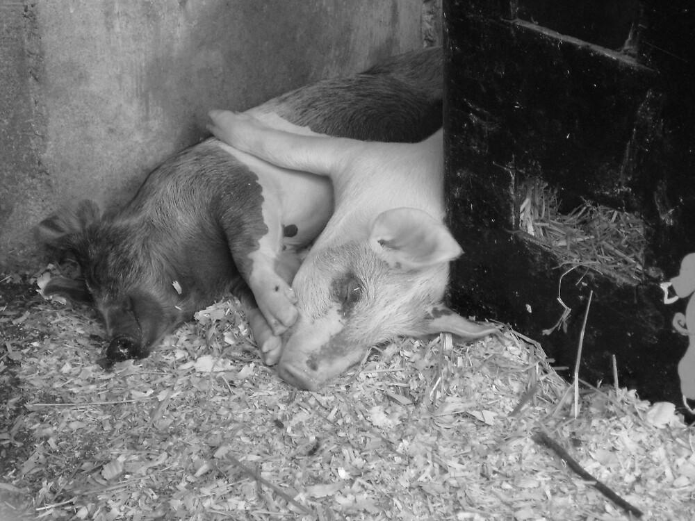 pig love by jamreco