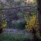 Riparian Scene by Barbara Wyeth