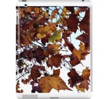 Sycamore Leaves Against the Sky iPad Case/Skin