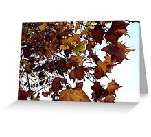 Sycamore Leaves Against the Sky Greeting Card