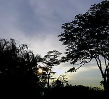 Singapore sunset at the Botanical Gardens by Leone
