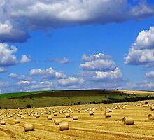 Harvest by peony