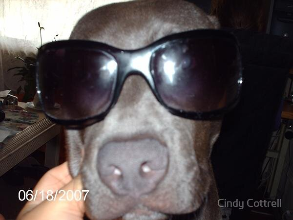 Like My Shades!! by Cindy Cottrell