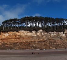 Seaside Trees by Marty Handy