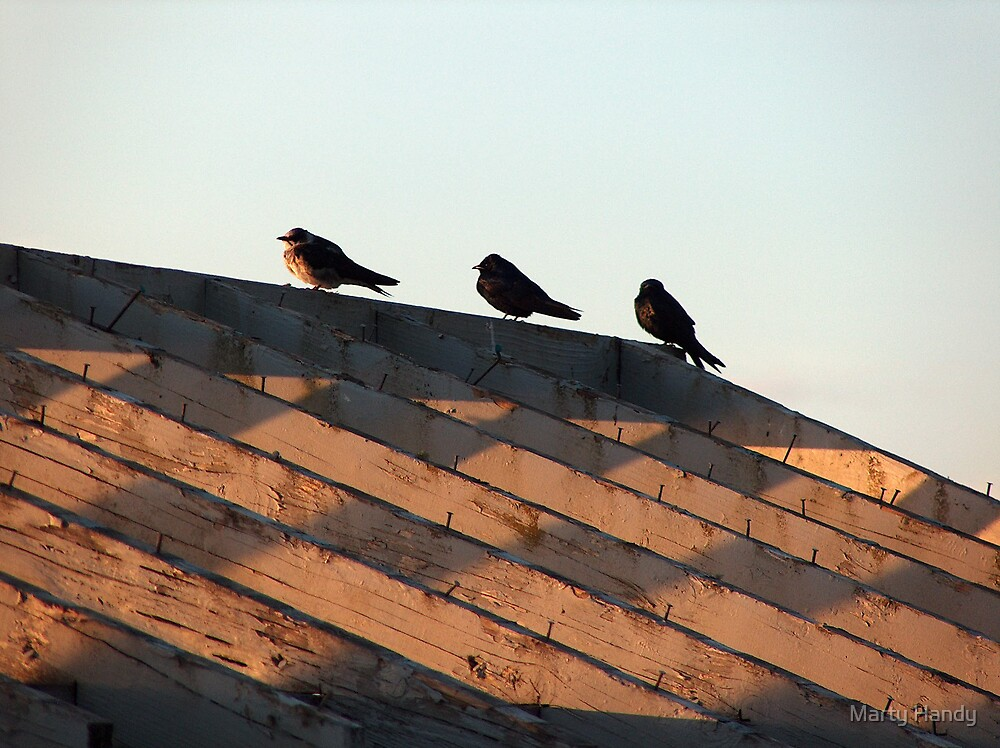 three Blue Martin Birds in a row. by Marty Handy