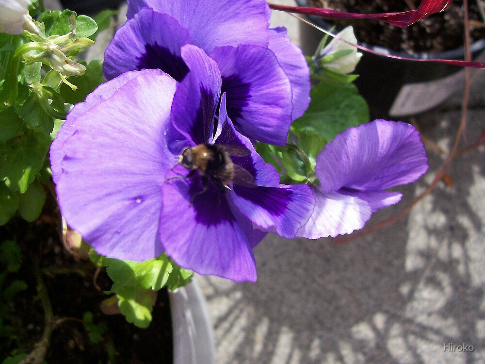 Pansy by Hiroko