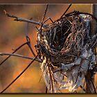 The Nest by Sheryl Gerhard