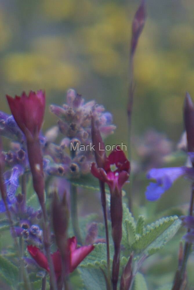 Soft  by Mark Lorch