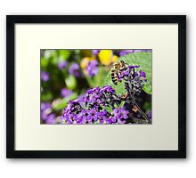 To bee ...1 Framed Print