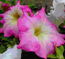 Pink Petunias by Maureen Smith