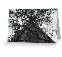Big Tree Looking Up From The Trunk Greeting Card