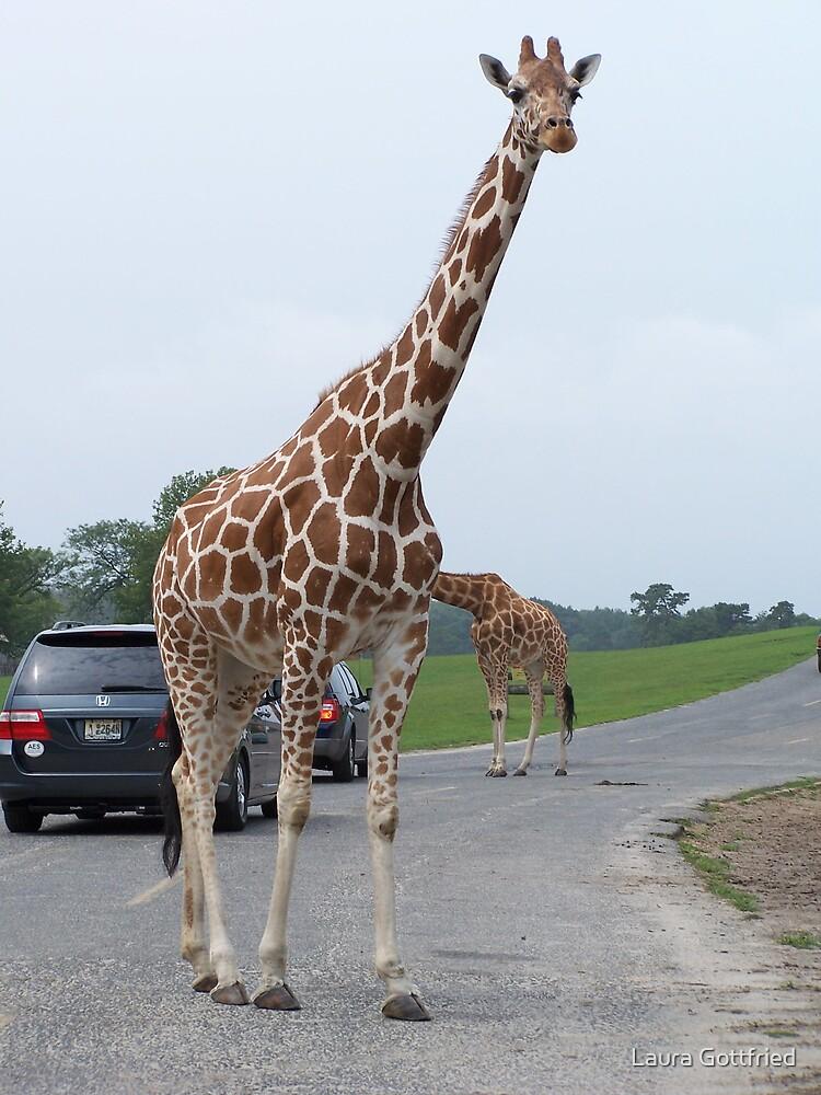 Giraffe in traffic by Laura Gottfried