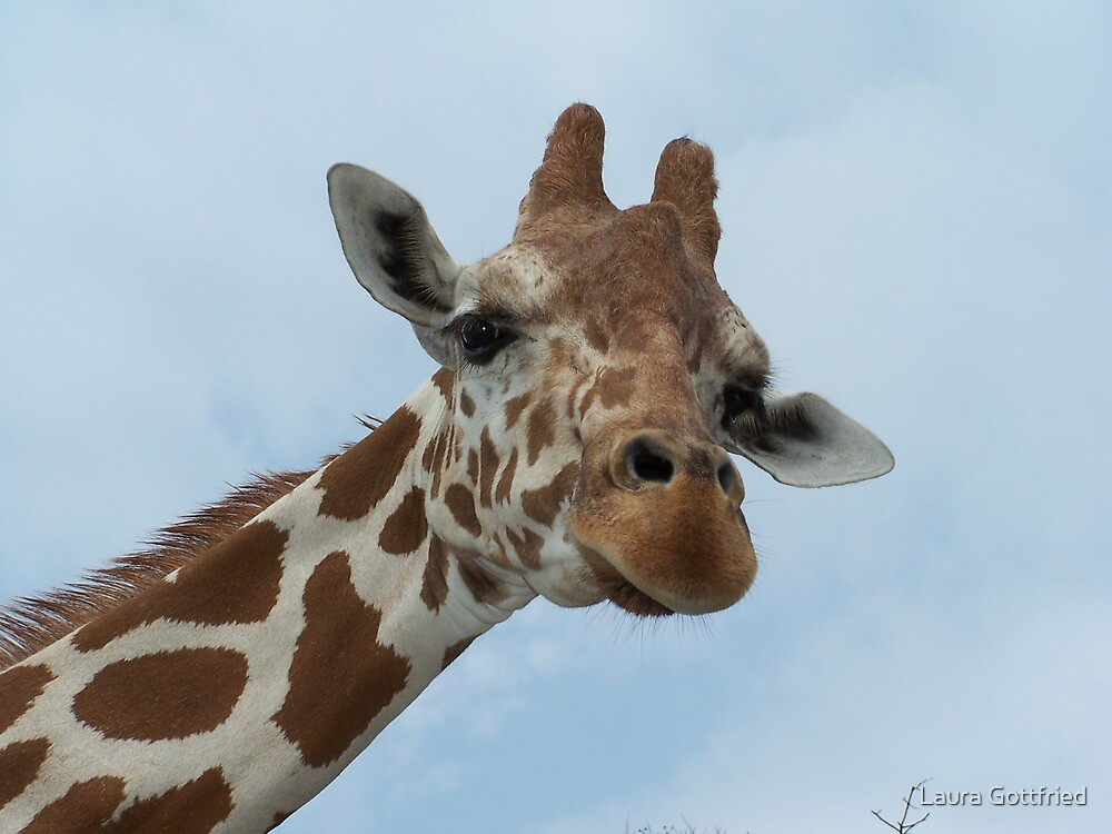 Giraffe by Laura Gottfried