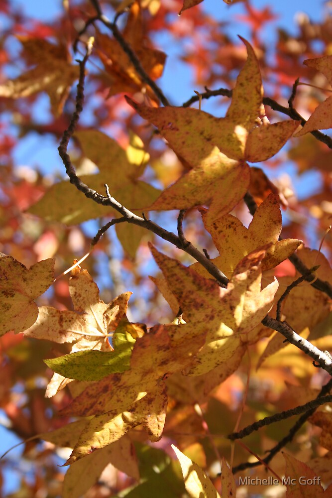 Autumn by Michelle Mc Goff