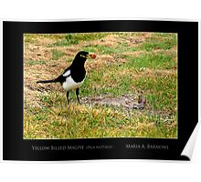 Yellow-Billed Magpie - Cool Stuff Poster