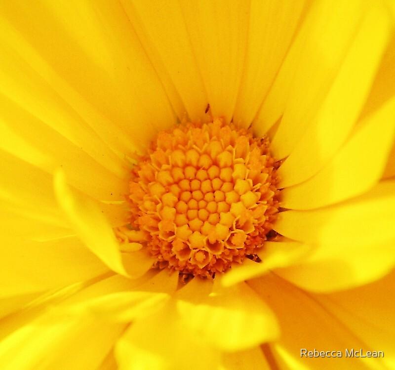 Sunshine by Rebecca McLean