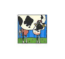 Cow III Photographic Print