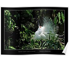 Displaying Egret - Cool Stuff Poster