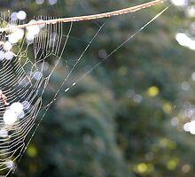 webbage by Carl Osbourn