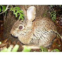 Cold Bunny Photographic Print