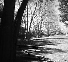 Row of trees by lisarose
