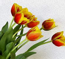 Tulips by Hans Kawitzki