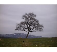 Tranquil Tree Photographic Print