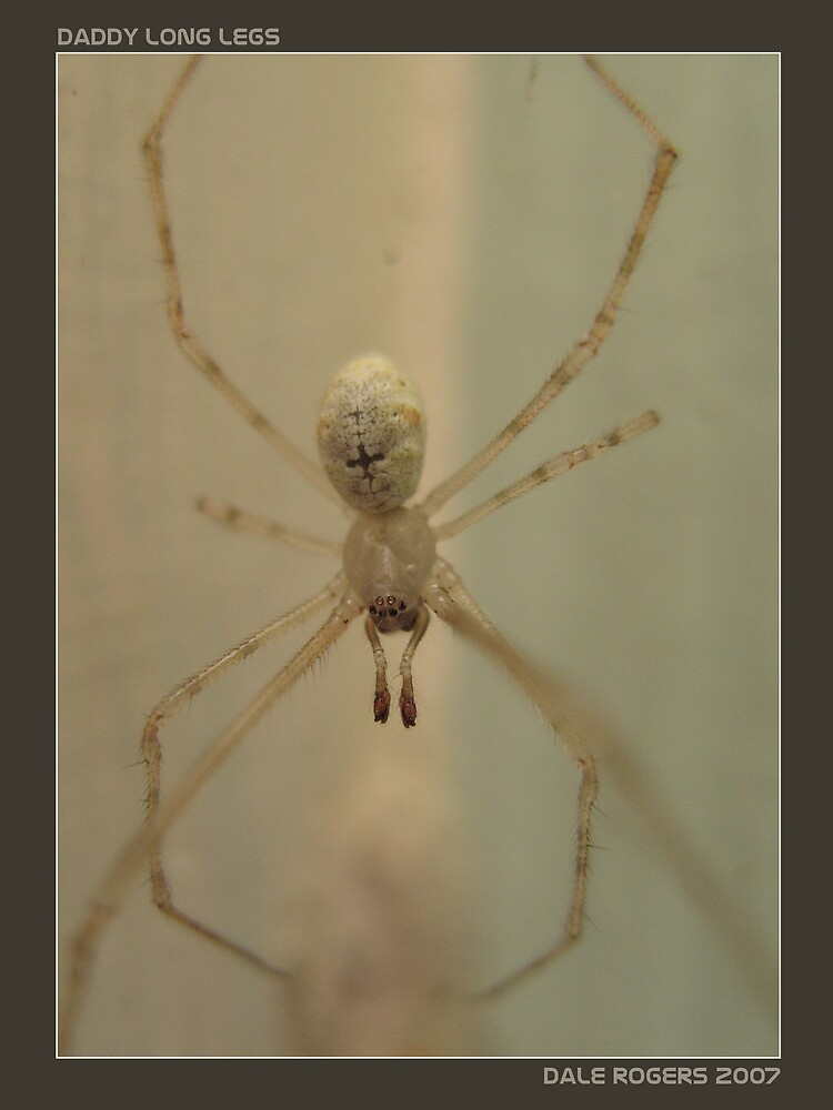 Daddy Long Legs by Photo Rangers