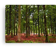 Beautiful Forest landscape Canvas Print