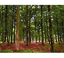 Beautiful Forest landscape Photographic Print