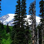 Mount Rainier 532 by jduffy111