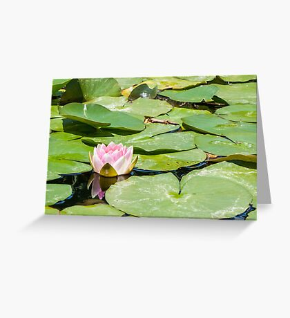 Lonely little Water Lily Greeting Card