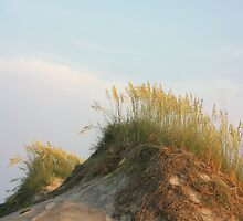 Sea Oats by Kenn Jensen