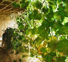 Pergola covered by hanging grapevines by Ron Zmiri