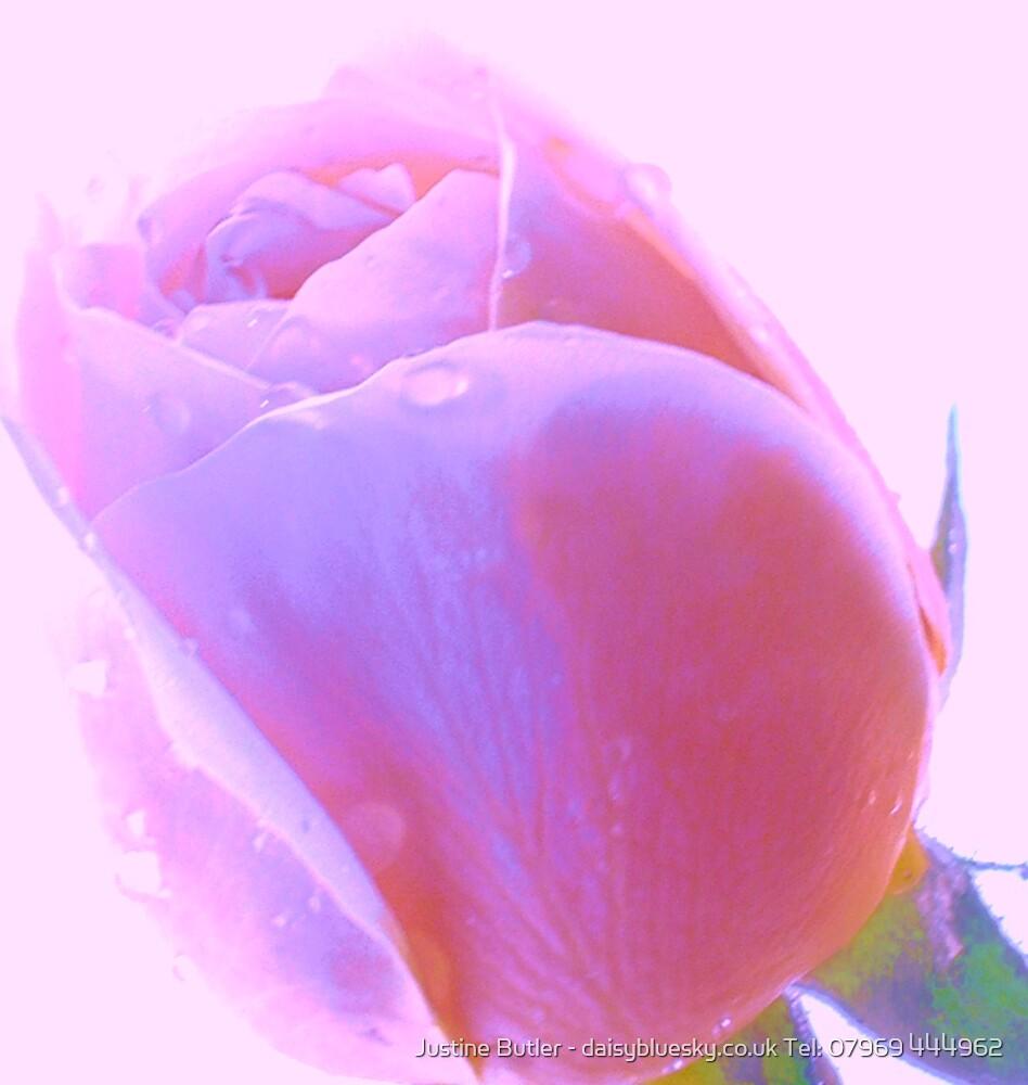 Dusky Pink Rose on Pink Sky by Justine Butler - daisybluesky.co.uk Tel: 07969 444962