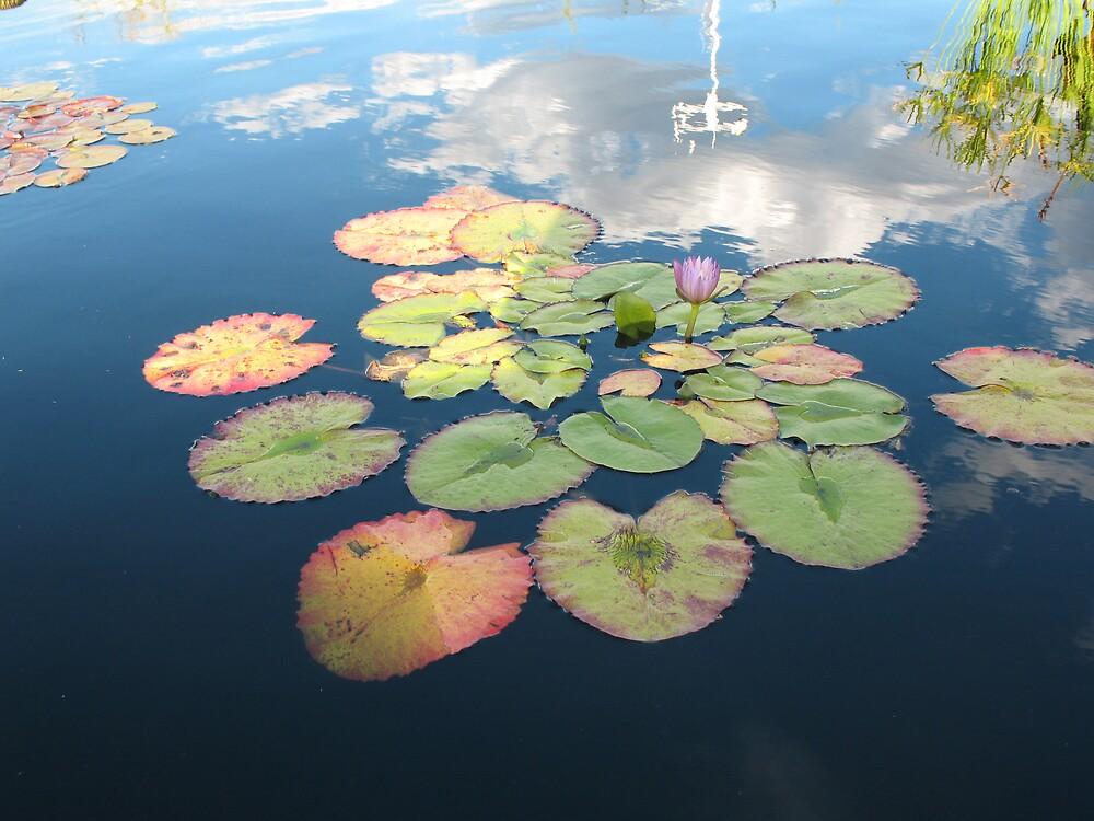 Sunset lilies by Brynne Kaufmann