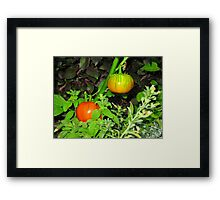 Color garden Framed Print
