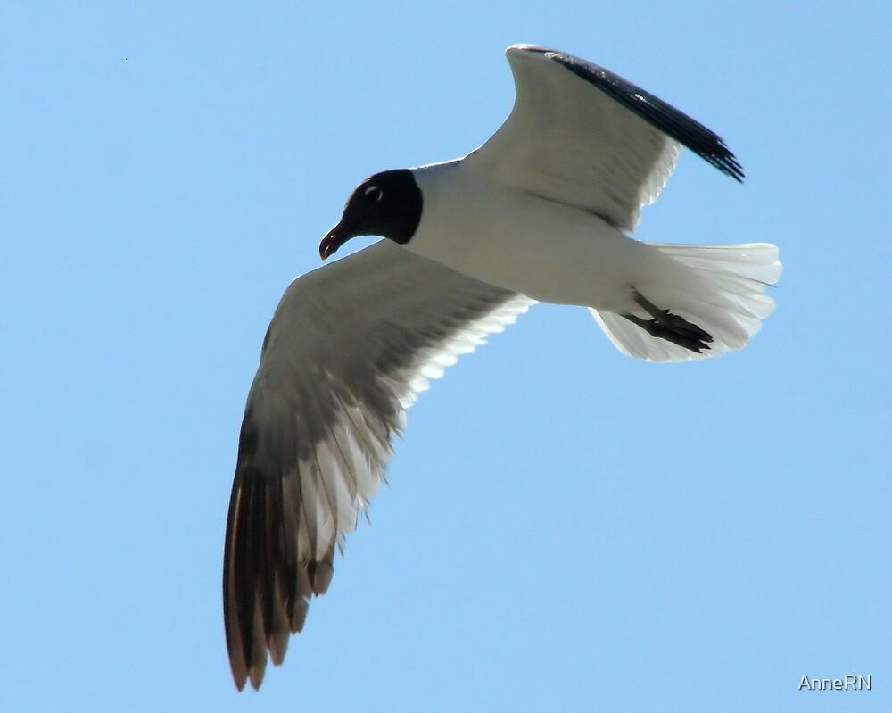 Seagull in Flight by AnneRN