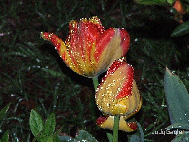 Rain Drops by Judy Gayle Waller