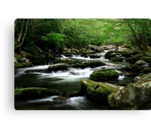Mossy Mountain Stream Canvas Print