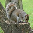 Squirrel by Andy Harris
