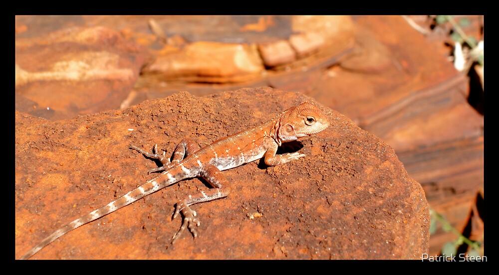 Lizard by Patrick Steen