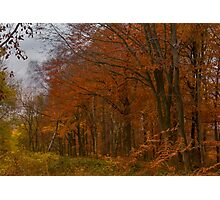 Autumn in the Woods Photographic Print
